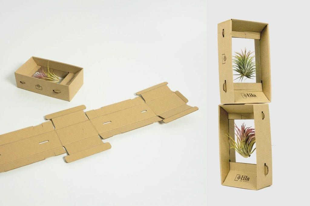 rastlina v krabičke, pričom sa zdá, že sa v nej rastlina vznáša